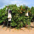 עמלי – תוכניות חינוכיות חקלאיות למשוחררים ומשוחררות